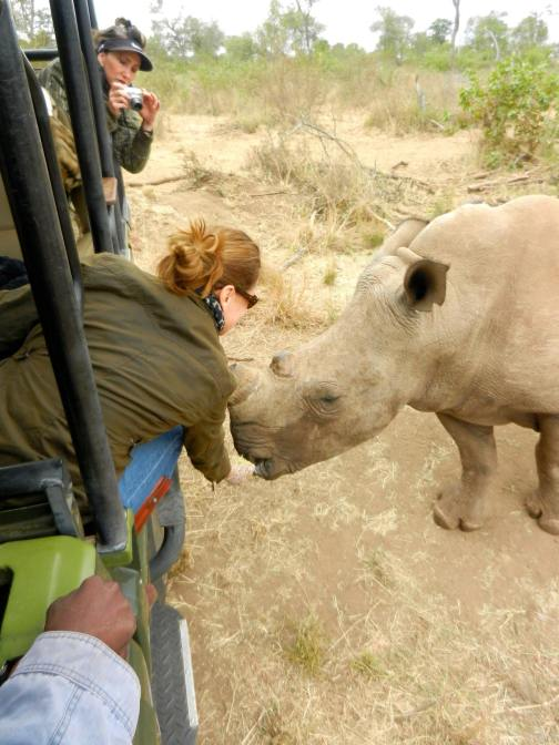 White Rhino Douwlina in South Africa
