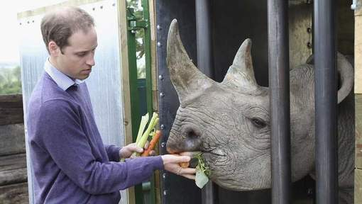 Prince William feeds Rhino